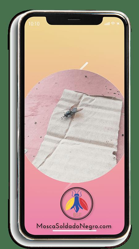 Productos-larvas-mosca-soldado
